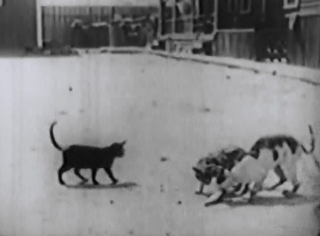 Our Gang - The Buccaneers - cats on street eating fish