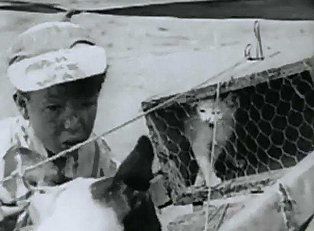 Our Gang - Derby Day Mickey Daniels with white cat in cage in front of dog on vehicle