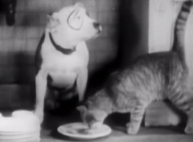 Our Gang - Little Mother - tabby cat eats food from Pete's dish
