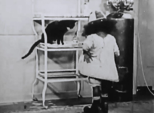 Our Gang - No Noise - tuxedo cat sitting on cart in operating room