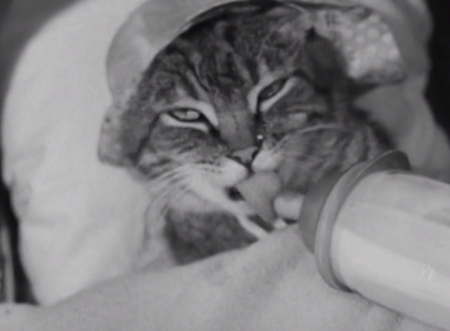 Our Gang - Practical Jokers - tabby cat wearing bonnet drinking milk from bottle