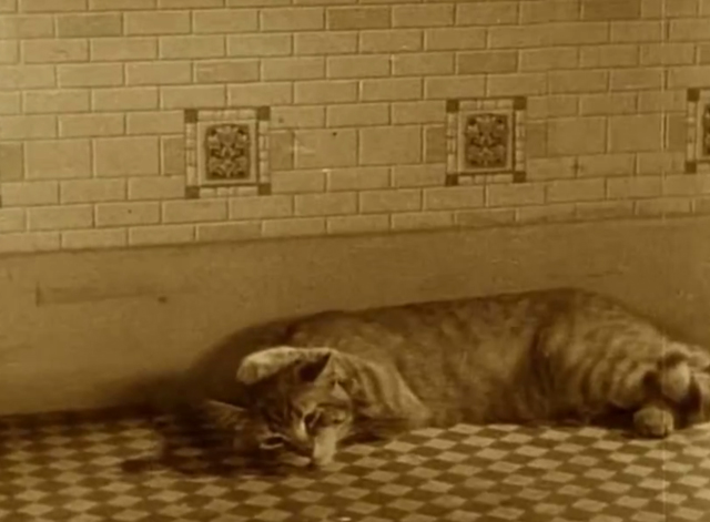 Our Gang - The Spanking Age - tabby cat on kitchen floor with paw over head