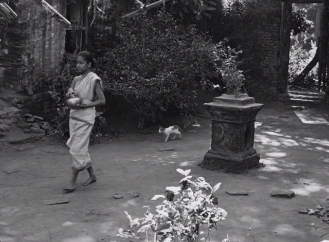 Pather Panchali - cat following older Durga Uma Das Gupta across yard
