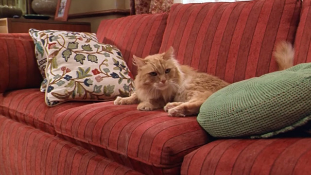 Paulie - long-haired ginger tabby cat on couch