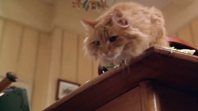 Paulie - long-haired ginger tabby cat about to jump off table with onion on ear