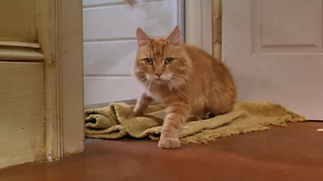 Paulie - long-haired ginger tabby cat turning from glass door