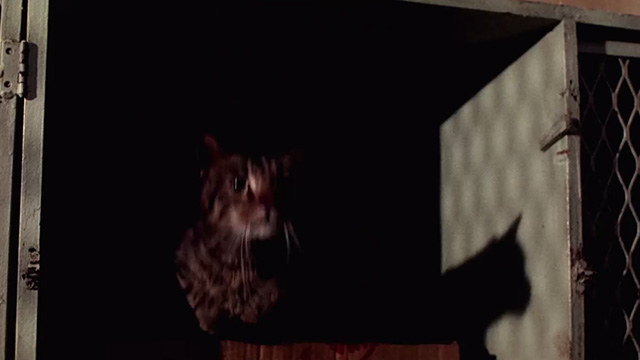 Pet Sematary Two - tabby cat about to leap out of cardboard box
