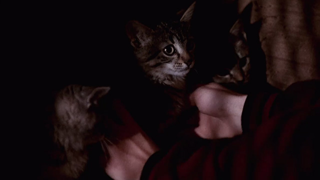 Pet Sematary Two - tabby kitten Tiger being picked up from cardboard box