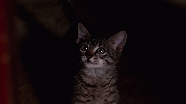 Pet Sematary Two - tabby kitten Tiger looking startled