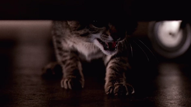 Pet Sematary Two - tabby kitten Tiger hissing under table