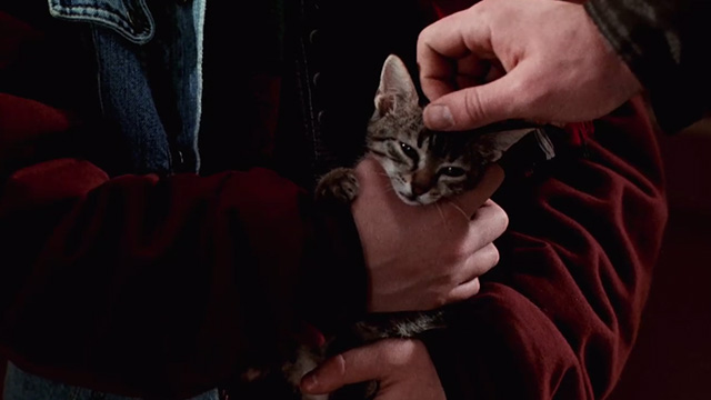 Pet Sematary Two - tabby kitten Tiger being petted on head
