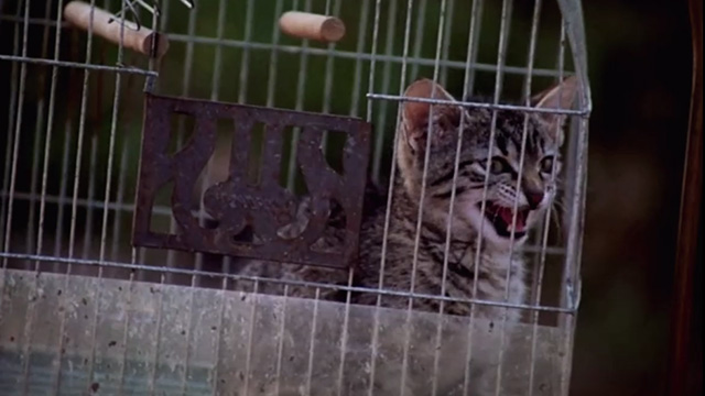 Pet Sematary Two - tabby kitten Tiger inside bird cage