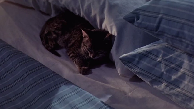 Pet Sematary Two - tabby kitten Tiger sleeping next to pillow