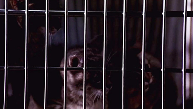 Pet Sematary Two - tabby kittens inside cage