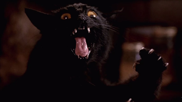 Pet Sematary Two - crazy looking taxidermied black cat