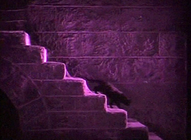 Phantom of the Opera silent - black cat walking down stone steps