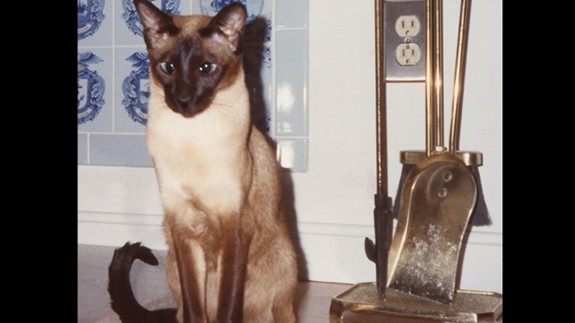 Pickle - photo of Siamese cat Samantha