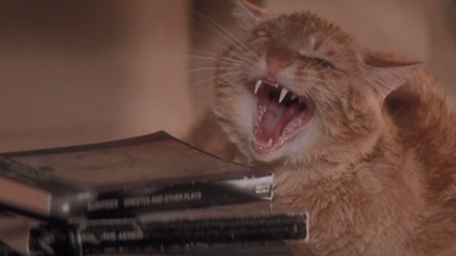 Playing by Heart - one eyed ginger tabby cat Blanche on bookshelf hissing