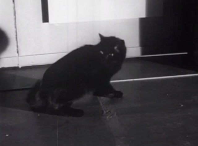 Please Murder Me! - detail of black cat caricature on movie poster