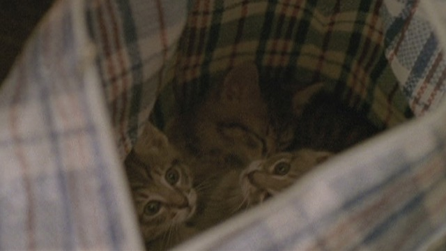 The Pleasure of Being Robbed - bag full of kittens
