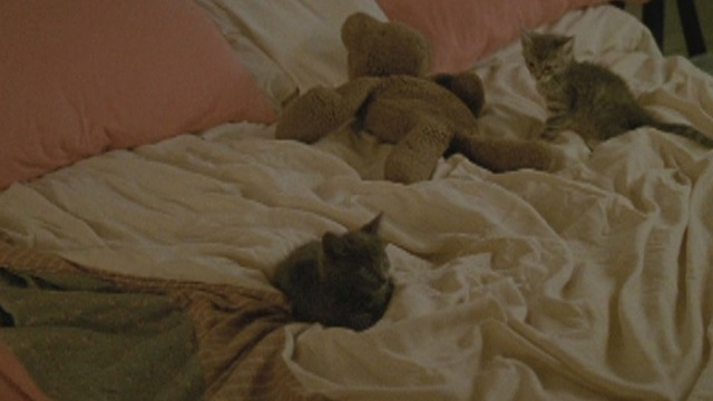 The Pleasure of Being Robbed - gray and tabby kittens on bed