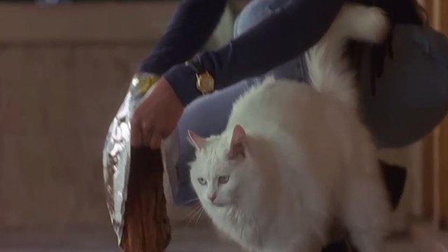 Poetic Justice - long-haired white cat White Boy next to bowl being filled with dry food