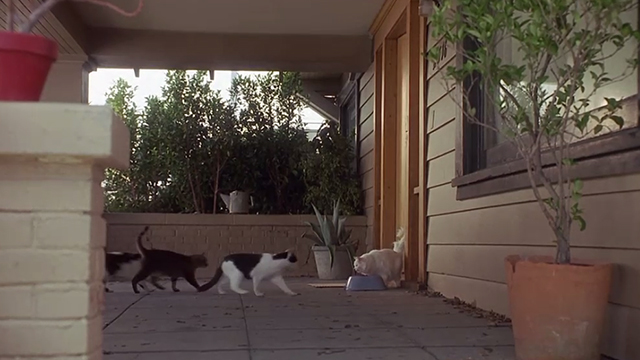 Poetic Justice - three cats approaching long-haired white cat White Boy and bowl of food on porch