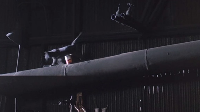 Police Academy 6: City Under Siege - gray cat running along pipe by can