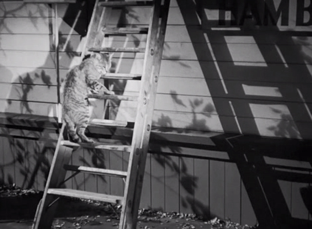 The Postman Always Rings Twice - shorthair cat climbing up ladder