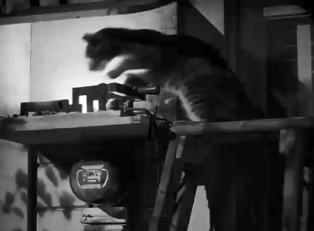 The Postman Always Rings Twice - shorthair cat jumping away from sparking fusebox