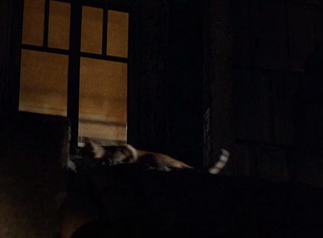 The Postman Always Rings Twice 1981 - orange tabby cat on roof