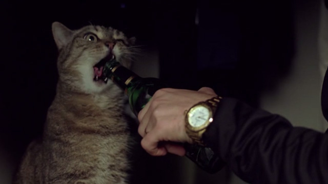Prime - tabby cat with mouth open and beer bottle
