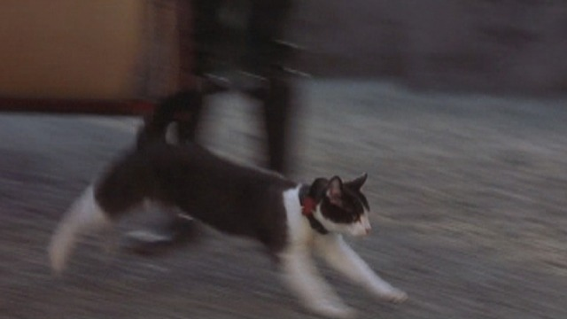 The Princess Diaries 2: Royal Engagement - tuxedo cat Fat Louie running into castle