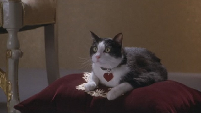 The Princess Diaries 2: Royal Engagement - tuxedo cat Fat Louie on cushion