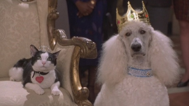 The Princess Diaries 2: Royal Engagement - tuxedo cat Fat Louie and poodle Maurice wearing tiaras