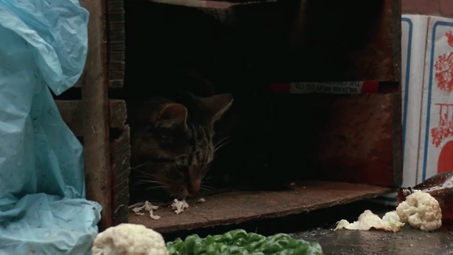 Proof - Bengal tabby cat Ugly eating bits of meat in crate