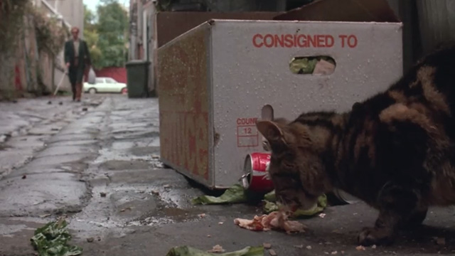 Proof - Bengal tabby cat Ugly eating meat in alley as Martin Hugo Weaving approaches