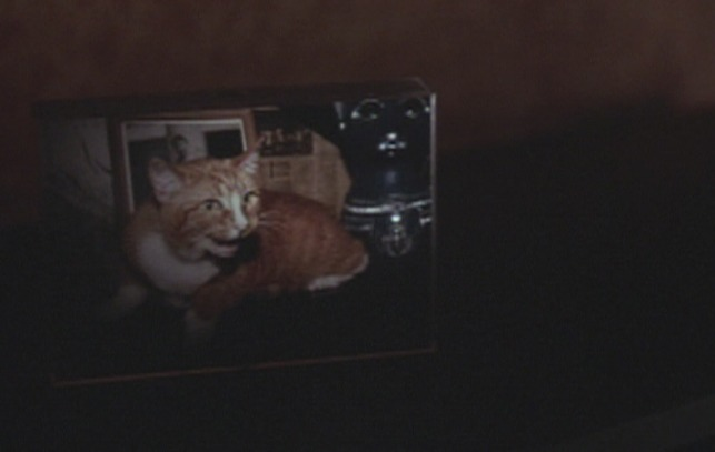 P.S. Your Cat is Dead! - framed photo of cat Tennessee