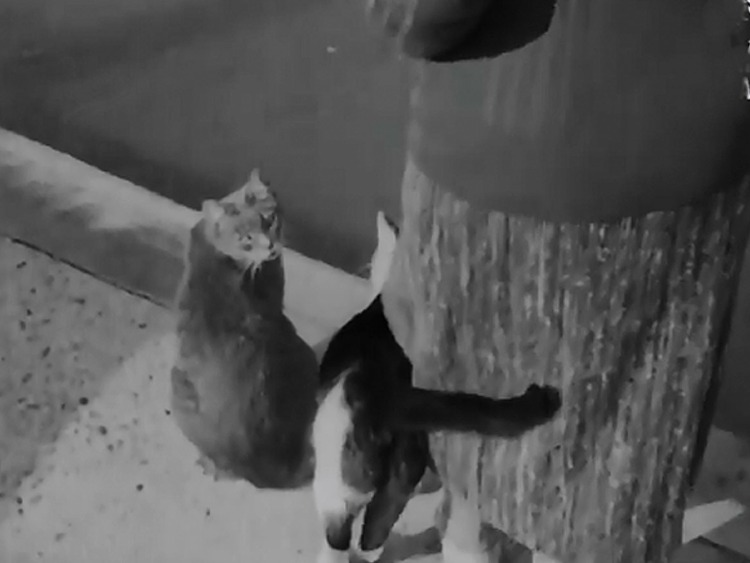Pure and Simple newsreel - cats on edge of Thames