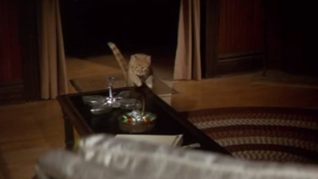 Rage - orange tabby cat about to get on coffee table
