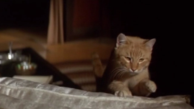 Rage - orange tabby cat getting up on back of chair