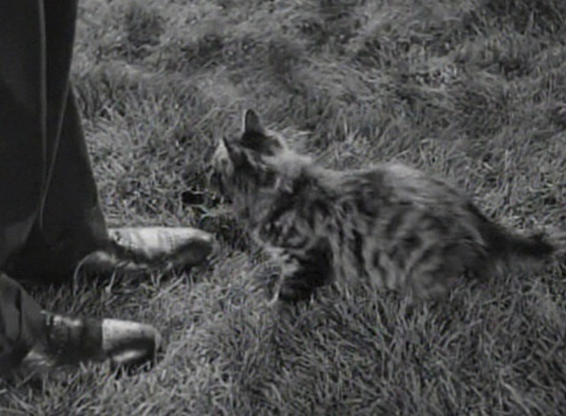 Rage in Heaven - Maine Coon kitten in grass at Robert Montgomery's feet