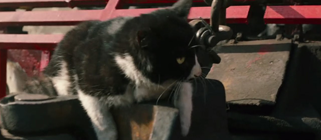Railroad Tigers - tuxedo cat sitting on front of train