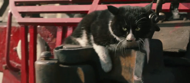 Railroad Tigers - tuxedo cat hanging onto front of train which starts moving back