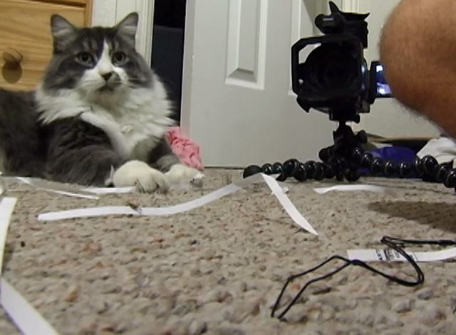 Ramblin' Freak - Cat on floor with video camera