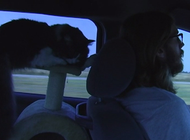 Ramblin' Freak - Cat sleeping on cat tree in car with Parker Smith