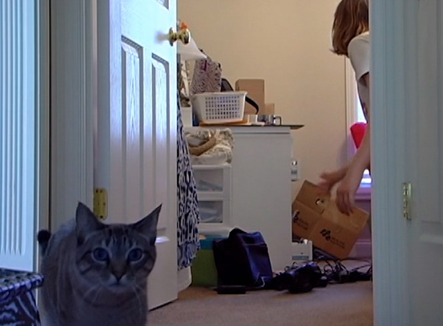 Ramblin' Freak - tabby cat approaching video camera
