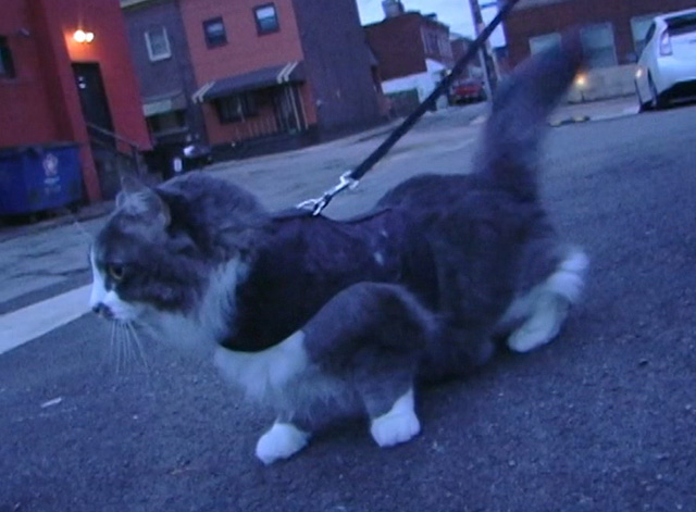 Ramblin' Freak - Cat on leash outside car