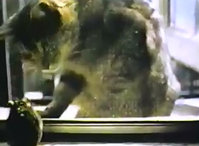 Rat Life and Diet in North America - tabby cat watching mouse through window