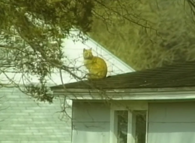 Redneck Zombies - orange tabby cat sitting on roof